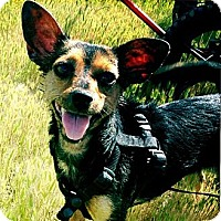 Adopt A Pet :: Sweet Coralina - Concord, CA