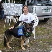 Adopt A Pet :: Rocky - Green Cove Springs, FL