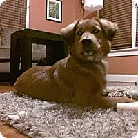 Adopt A Pet :: Miley - Evansville, IN
