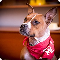 Adopt A Pet :: Tugboat - Chicago, IL