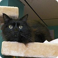 Adopt A Pet :: Hermie - Dover, OH