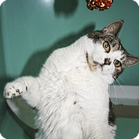 Adopt A Pet :: Mickey - Rockaway, NJ