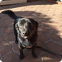 Adopt A Pet :: Toby - San Diego, CA
