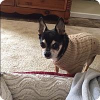 Adopt A Pet :: Frankie - Barnegat, NJ