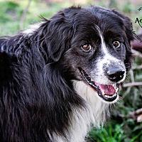 Adopt A Pet :: Zephan - Charleston, SC
