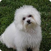 Adopt A Pet :: Jingles - Covina, CA