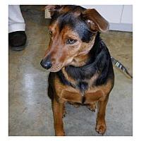 Adopt A Pet :: Ziggy meet me 6/30 - Manchester, CT