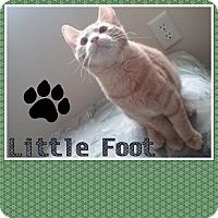 Adopt A Pet :: Little Foot - Cedar Springs, MI