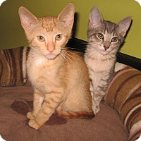 Adopt A Pet :: Mack and Goldie - Colmar, PA