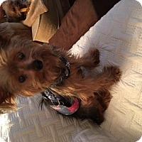Adopt A Pet :: Teddy (AB) - Tampa, FL