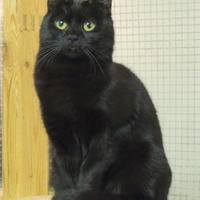 Adopt A Pet :: Alice - Westville, IN