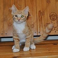 Adopt A Pet :: Moe - Parsons, KS