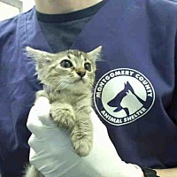 Adopt A Pet :: A292970 - Conroe, TX