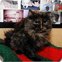 Adopt A Pet :: Shivers - Farmingdale, NY