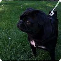 Adopt A Pet :: Dani - Eagle, ID