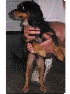 Terrier (Unknown Type, Small) Dog for adoption in Huntingdon, Pennsylvania - Peepers