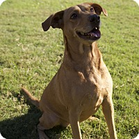 Adopt A Pet :: Dolly - Byhalia, MS