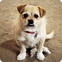 Adopt A Pet :: Elsa - Beavercreek, OH