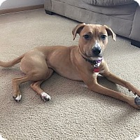 Adopt A Pet :: Reya - West Allis, WI