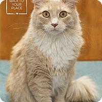 Adopt A Pet :: York - Washburn, WI