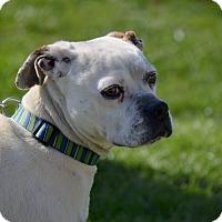 Adopt A Pet :: Niles - WESTMINSTER, MD