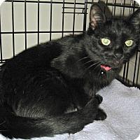 Adopt A Pet :: Cleo - Jefferson, NC
