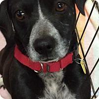 Adopt A Pet :: Frank($200) - Redding, CA
