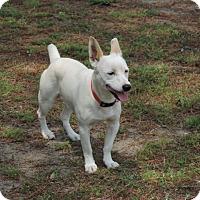 Adopt A Pet :: Titus - Dublin, GA