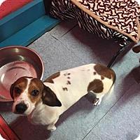 Adopt A Pet :: Plum - York, SC