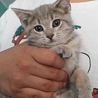 Adopt A Pet :: Wario - Huntington, IN