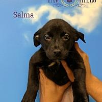Adopt A Pet :: Salma - Agoura Hills, CA