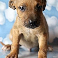 Adopt A Pet :: Zen - Waldorf, MD