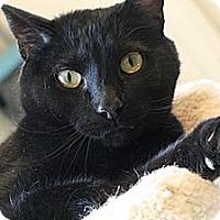 Adopt A Pet :: Sabrina - Columbia, MD