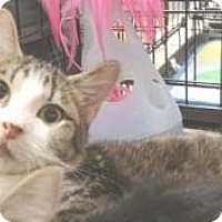 Adopt A Pet :: Buzz - Miami, FL