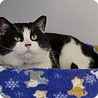 Adopt A Pet :: Dodger - North St. Paul, MN