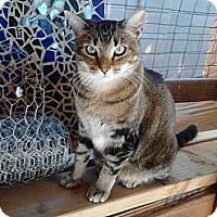 Adopt A Pet :: Sodapop - Mesa, AZ
