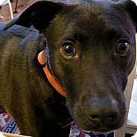 Adopt A Pet :: Vega CP - Dayton, OH