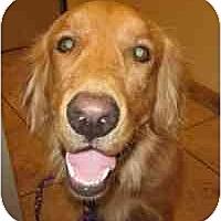 Adopt A Pet :: Payson - Scottsdale, AZ