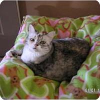 Adopt A Pet :: MONA LISA - Phoenix, AZ