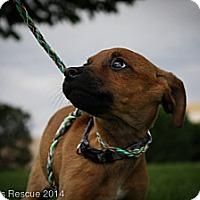 Adopt A Pet :: Otis - Broomfield, CO