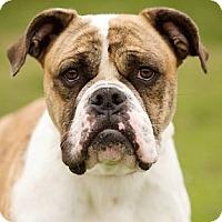 Adopt A Pet :: Rhonda - Huntley, IL