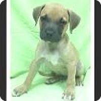 Adopt A Pet :: Cinco - Las Vegas, NV