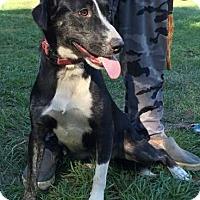 Adopt A Pet :: Judy - Ocala, FL