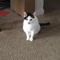 Adopt A Pet :: Tutti ( Courtesy Listing) - Hampton, VA