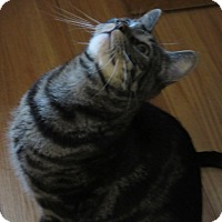 Adopt A Pet :: Henry - Roseville, MN