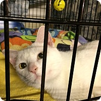 Adopt A Pet :: Boomer - Byron Center, MI