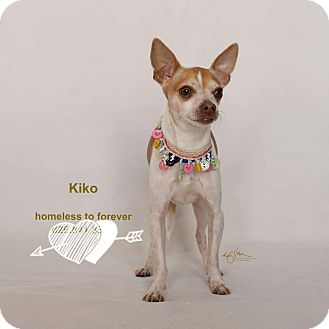 Chihuahua Mix Dog for adoption in Sherman Oaks, California - Kiko