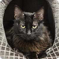 Adopt A Pet :: Hilo - St Helena, CA
