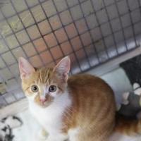 Adopt A Pet :: Yankee - Covington, LA