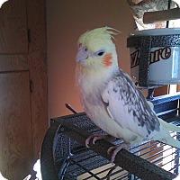 Adopt A Pet :: Sunny Girl and Pepe - Aurora, IL